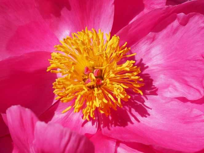 petals colorful flower color